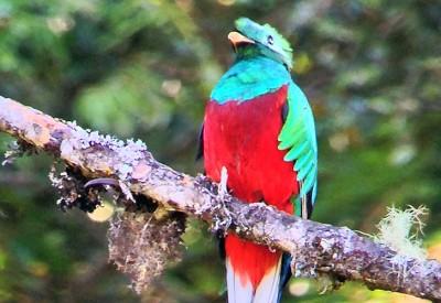 Costa-Rica_Quetzal
