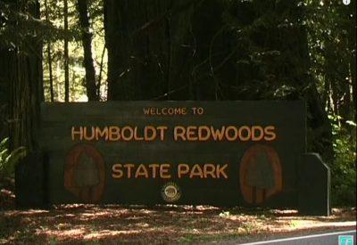 USA NATIONALPARKS Teil 1_Humboldt Redwoods State Park