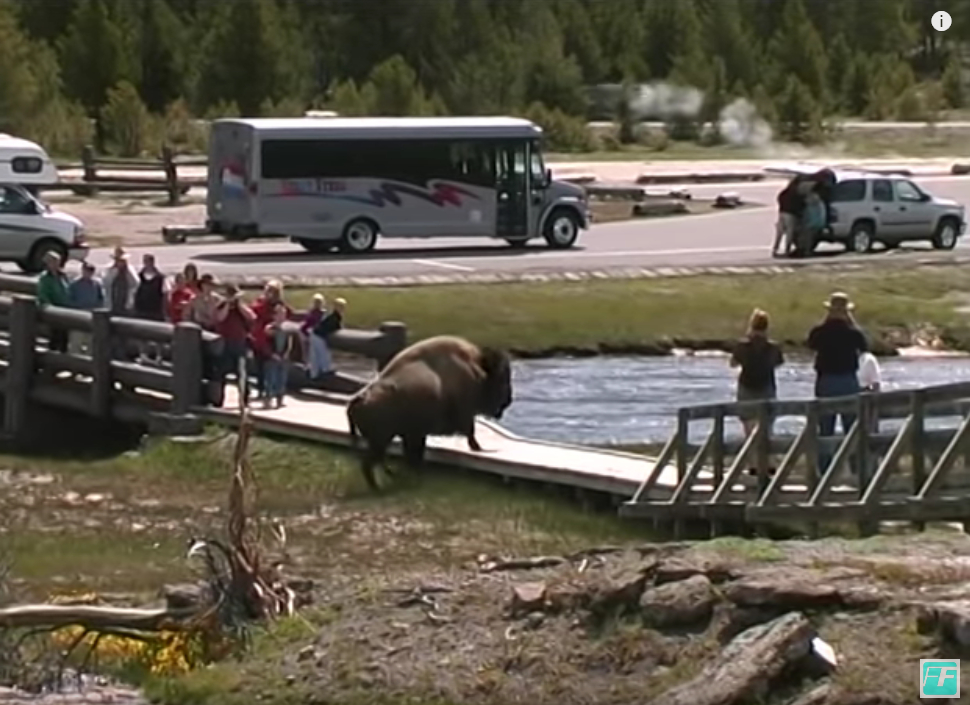 USA Nationalparks - zwischen Bergen und Savanne_Bison