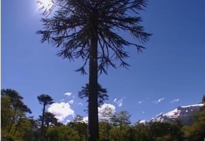 Chile - Abenteuer am Ende der Welt